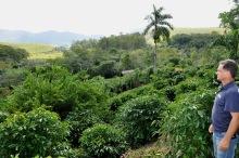 Produção de café com sustentabilidade ambiental em Itaperuna